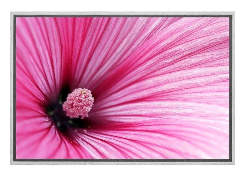 Buy Pink Hibiscus Flower Wall Art Print Online Australia Final