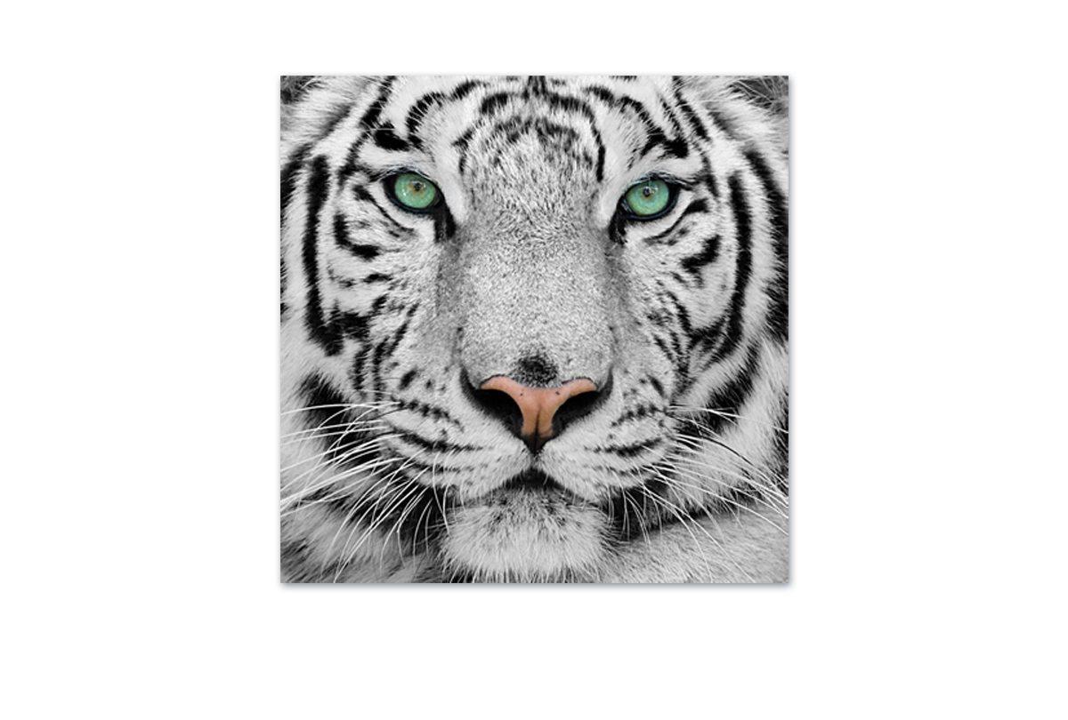 Buy White Tiger   Canvas Art Print Online Australia ...