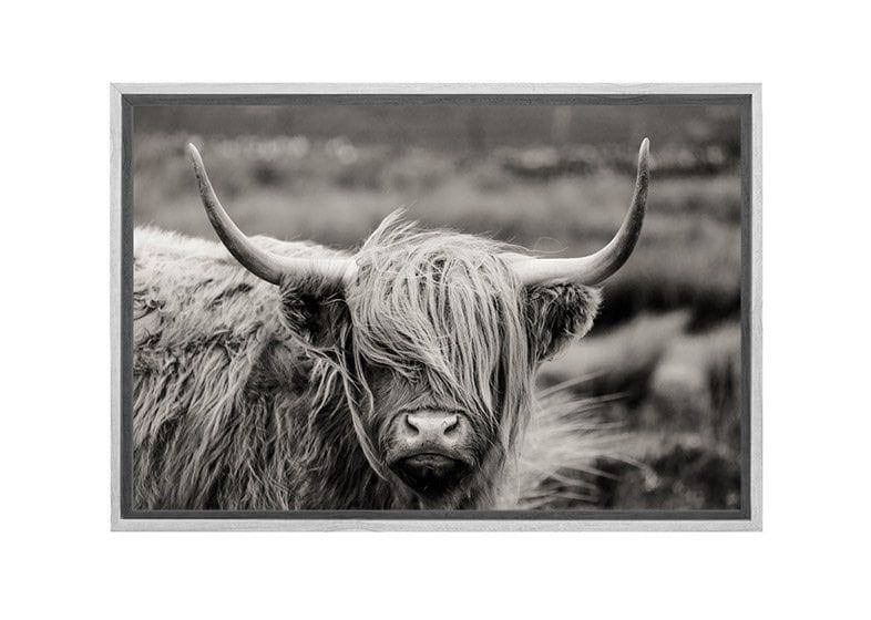 7bb7bfc7828 Highland Cow Canvas Print Wall Art