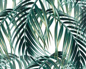 Leaf | Palm