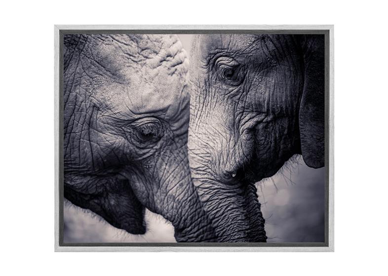 buy elephant love canvas wall art print online australia final