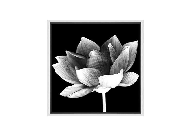 White Lotus Flower On Black Canvas Wall Art Print